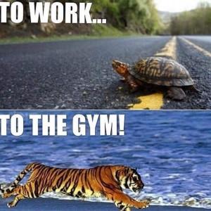 motivacion gym 21
